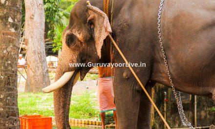 Guruvayoor Devaswom Elephants