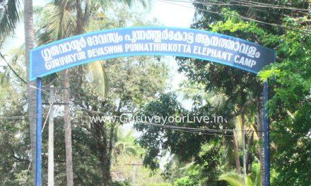 ഗുരുവായൂരിനോട് വിടവാങ്ങി ശേഷാദ്രി എന്ന കൊമ്പൻ