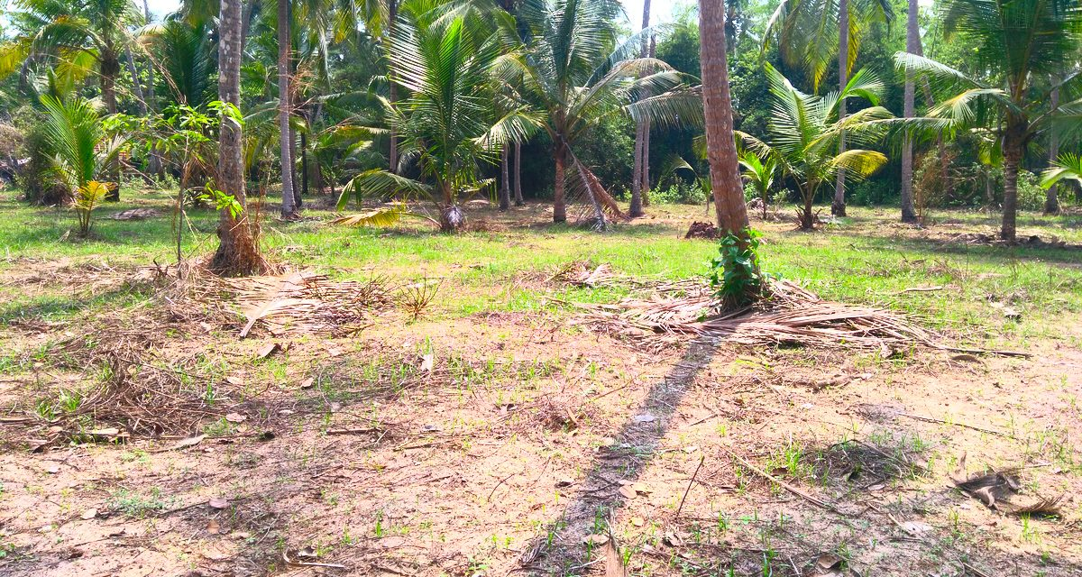 House Plots For Sale Near Mammiyoor